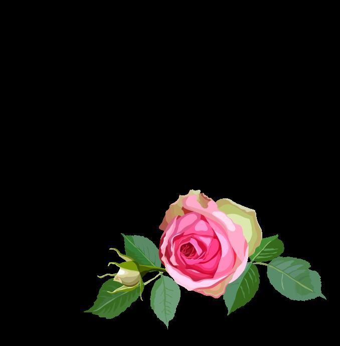 Rosen und Rosenblätter